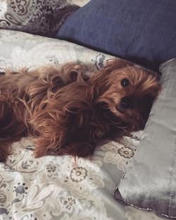 Sunday Snuggles!! ._._._._._