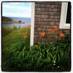 summer FLOWERS, seaSky cottages