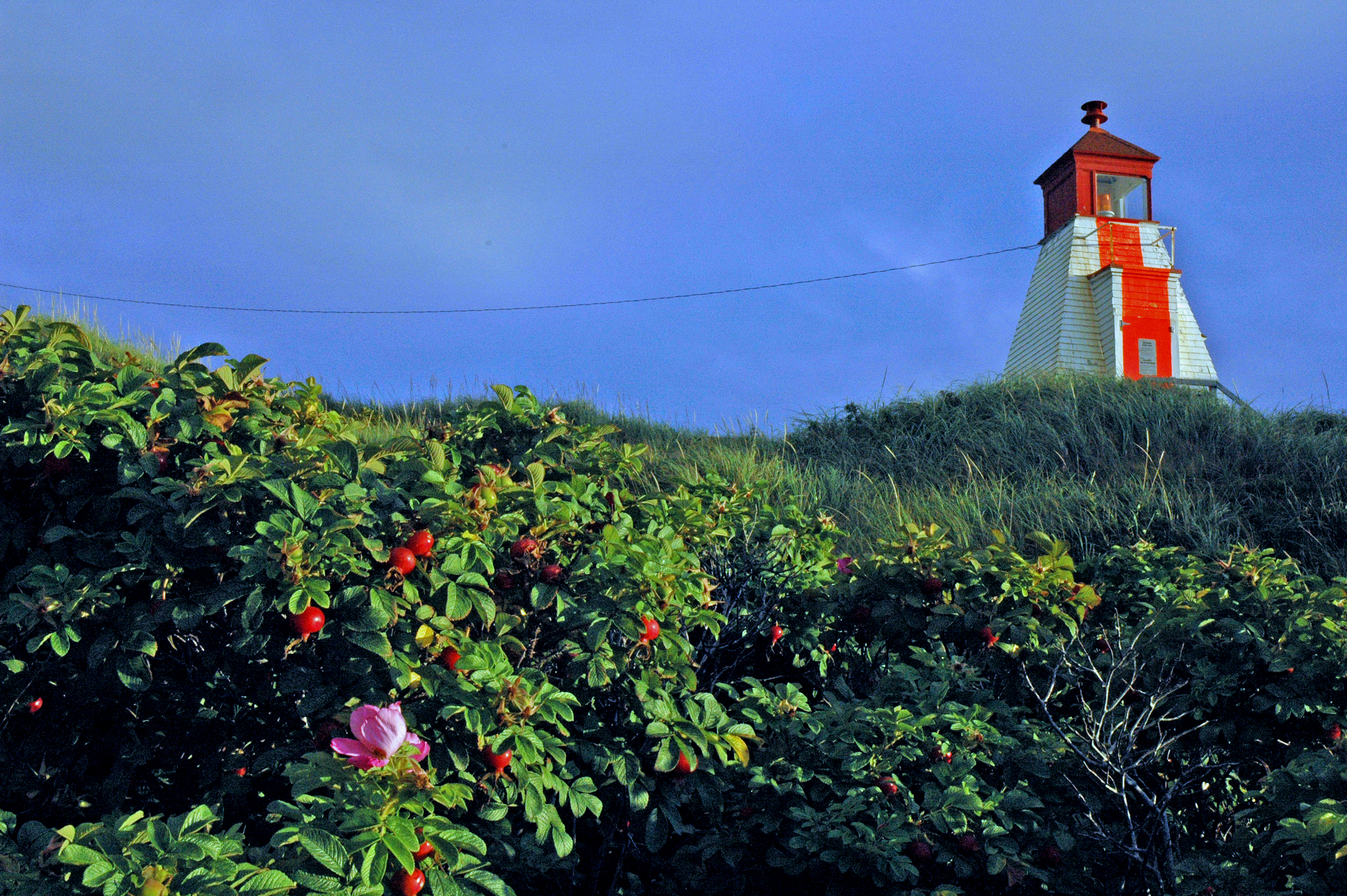 lighthouse and bloom, cape breton