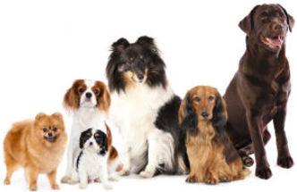 honden1-300x194.jpg
