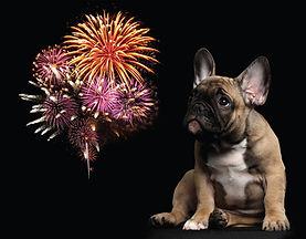 hond-vuurwerk.jpg