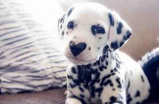 puppie 1.jpg