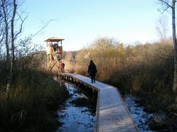 Fugletårnet i rørskov med gangbro