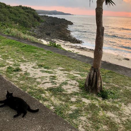ダンヌ浜のくろちゃん