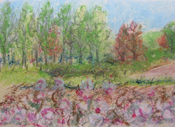WS oil pastel sketch 45.jpg