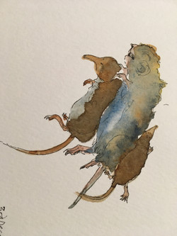 Mouse, vole and shrew: Jude the Obscure