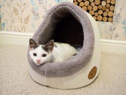 Butler & Milk Online Cat Store