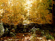 Stone wall vestiges in our woods, in autumn - 1