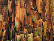 Aging tree stump, colored and textured by time and weather