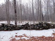 Stone wall vestiges in our woods, in winter
