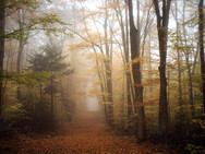 A misty autumn path in the woods