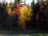 Autumn-colored trees, like a burning bush, along our back pond