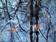 Sky and trees reflected in a shallow pool of water