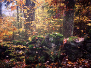 Stone wall vestiges in our woods, in autumn - 2