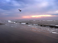 Sunrise at the seashore with a flying seagull