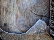 Patterns on a tree stump made by chain saw cuts