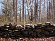 Stone wall vestiges in our woods, in late autumn