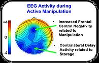 EEG copy.png