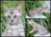 PicMonkey Image (19).jpg