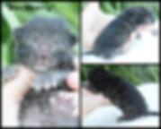 PicMonkey Image (26).jpg