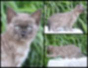PicMonkey Image (22).jpg