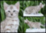 PicMonkey Image (20).jpg