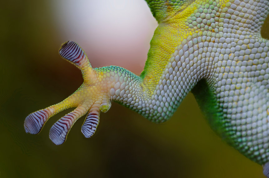 Canva - Green Reptile.jpg