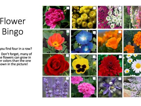 Outdoor Activity: Find the Flower!