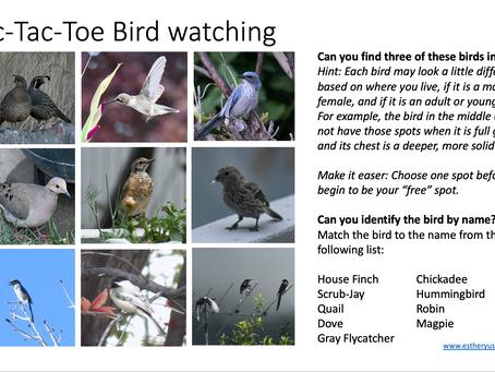 A Little Bird Watching Activity