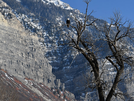 Creative Inspiration from the Birds: Eagles