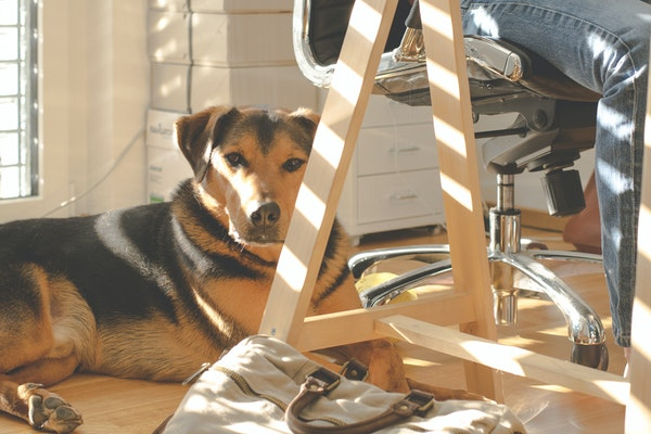 6jihNreCFmi8KgxlGeCBAS-animal-canine-cas