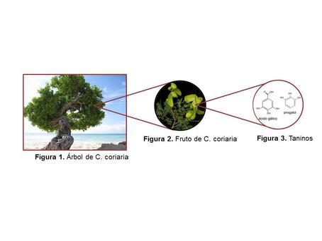 469 Estudio de una ruta de extracción para obtener compuestos polifenólicos