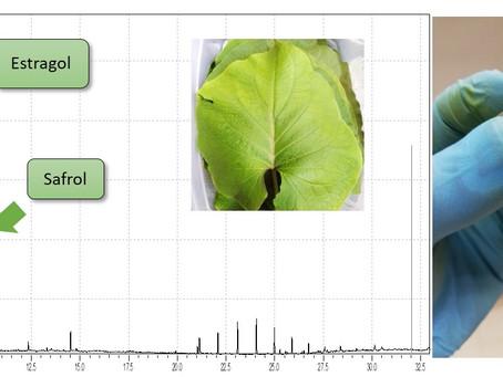 (199) Extracción y caracterización del aceite esencial de la hoja de momo (piper auritum)