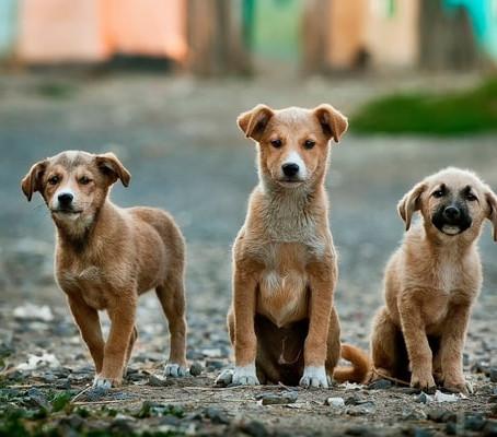 Stress bei Hunden (Teil 1)