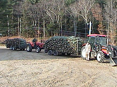 Wholesale Christmas Tree Harvest at Glove Hollow in Plymouth, NH