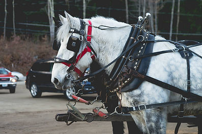 Glove Hollow offers horse hayrides