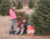 Cut Your Own Christmas Tree Central NH