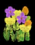 spring-flower-4165109_960_720.png