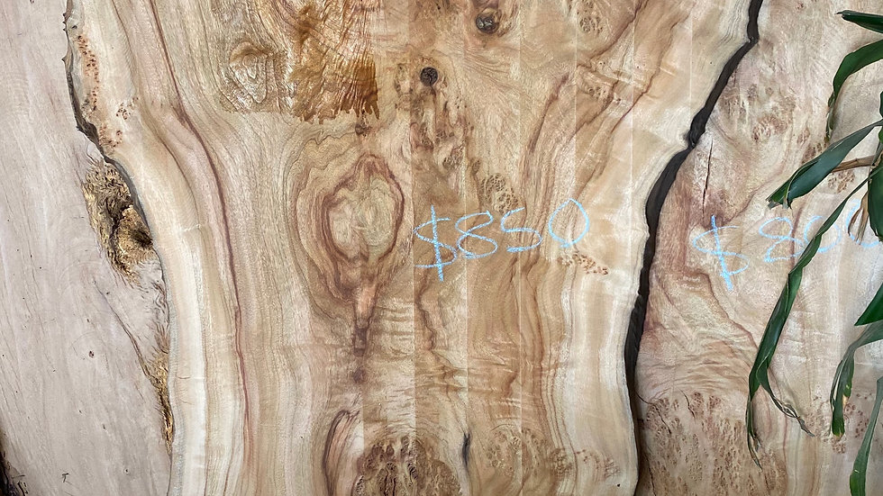 live edge slab (Camphor laurel)