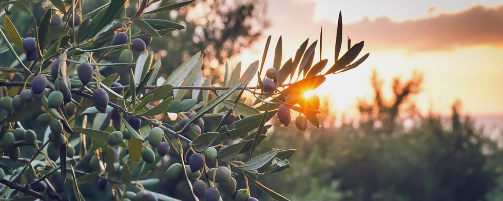 banner olio d'oliva 2.jpeg