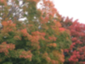 Autum splendor with the best grave care in Central Massachusetts