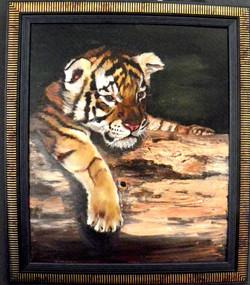 cassoest-tigercub