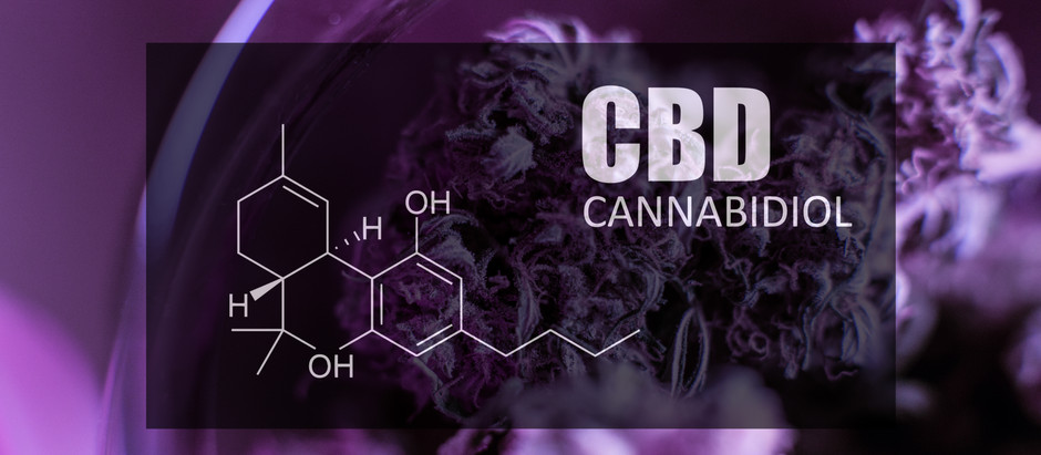 Importance of the Endocannabinoid System