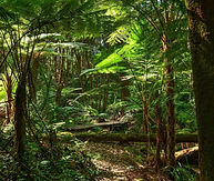Lowland%20Rainforest%20NSW_edited.jpg