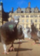 Pigeons at Town Hall.jpg