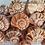 Thumbnail: BULK SHELLS! Lightning Whelks (20)