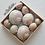 Thumbnail: BULK SHELLS! Shark Eye Moon Snails (6)