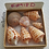 Thumbnail: SWFL Alphabet Cone Shell Collection