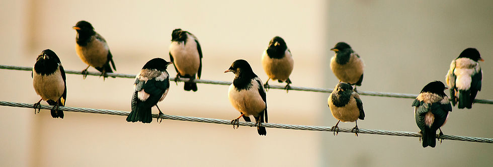 Birds on a wire lined up to inspire creativity.