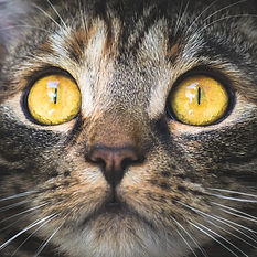 A close up of a cat's face with large yellow eyes to inspire creativity